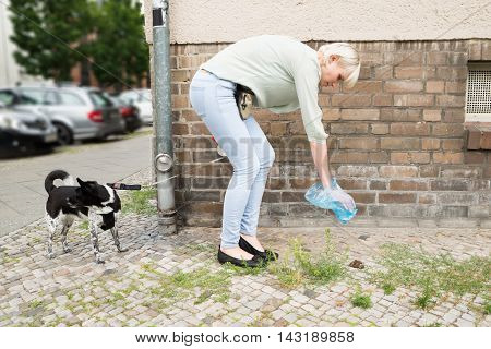 Young Woman With Plastic Bag Cleaning Dog Feces