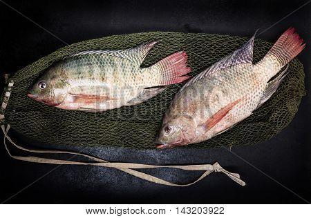 fresh tilapia fishes on black wooden backgrund.