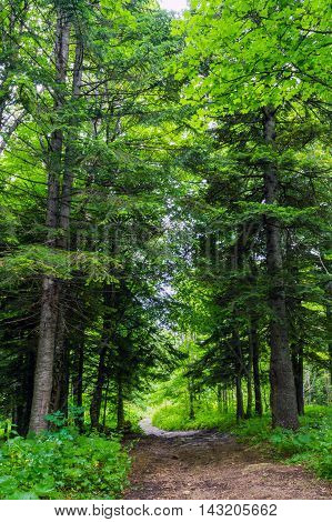Road In A Mixed Forest In Central Russia