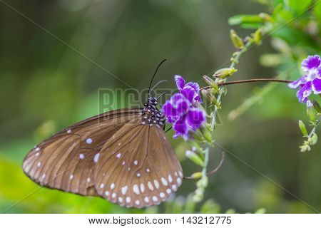 cute butterfly on purple flowers on nature background
