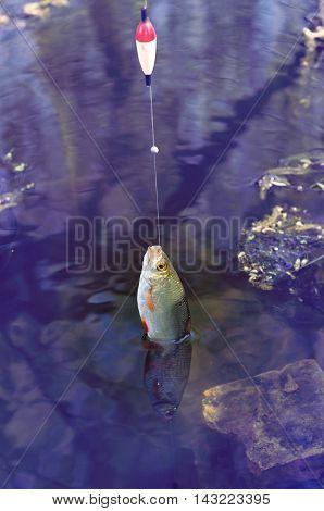 rudd caught on fishing gear retro tuning