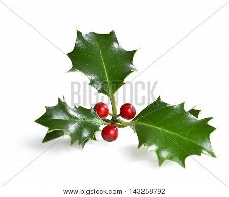 Christmas holly corner, isolated on white background, design element.