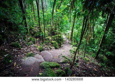 Footpath thru dense rainforest in Mossman Gorge, Queensland, Australia