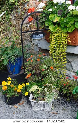 beautiful small garden on the front door
