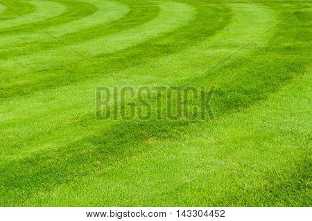 Beautiful green grass. Nice and lovely  background.