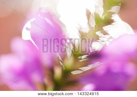 Abstraction Of   Pink Flower
