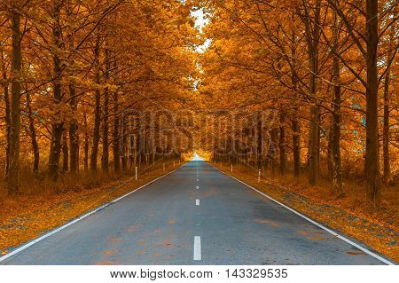 Highly detailed image of road in autumn woods