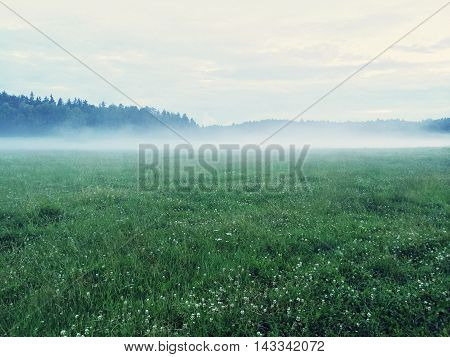 Dreamy green meadow with wild clover. Scandinavian nature.