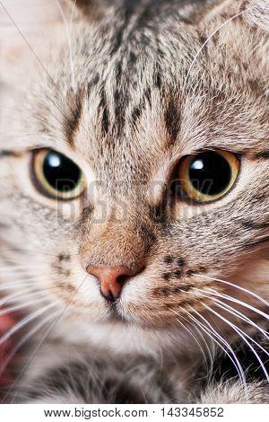 Close-up Beautiful Cat Portrait