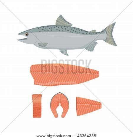 Salmon fish vector illustration. Raw fish, slice, steak, fillet. Flat style.