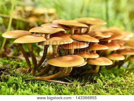 Fresh, brown mushrooms growing on a tree trunk, autumn scene with smooth sunlight. and copy space.
