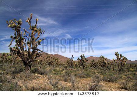 Beautiful California landscape in the Mojave National Preserve