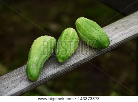 Green fresh cucumbers on the wooden planck
