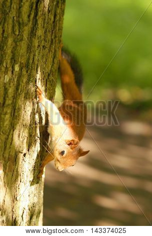 Squirrel Sitting On The Tree