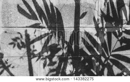 Shadow Of The Leaves On Block Cement Wall