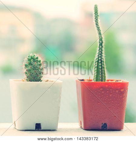 Cactus On Rainy Day