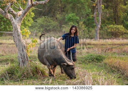 Woman with a water buffalo at a rural place.