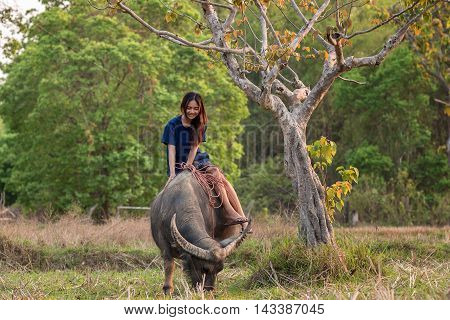 Women with a water buffalo at rural .