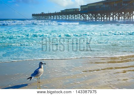 Daytona Beach in Florida shore with pier USA
