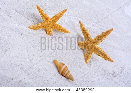 Orange starfishes and one shell on a greay sand
