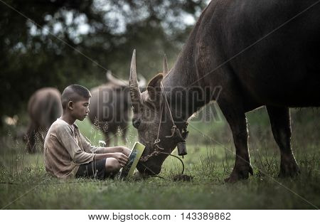 Boy reading book with him buffalo Thailand