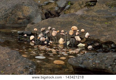 Group of shells on the sea shore