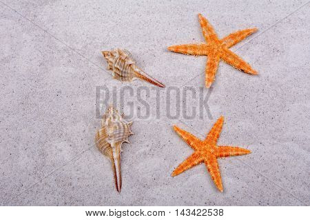 Orange starfishes and two shells on a greay sand
