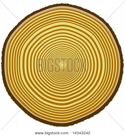 Vector illustration of tree rings from a 33-year-old tree