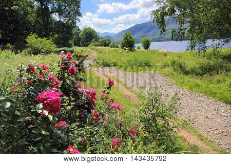 Flowers near the shore of Derwent Water in the English Lake District