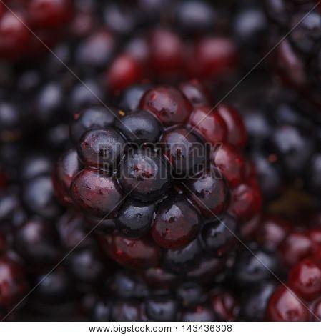 A Fresh Juicy Ripe Dewberry Close-up