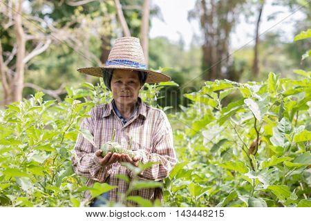 Thai Asian farmer working in field under warm sunshine, Thailand.