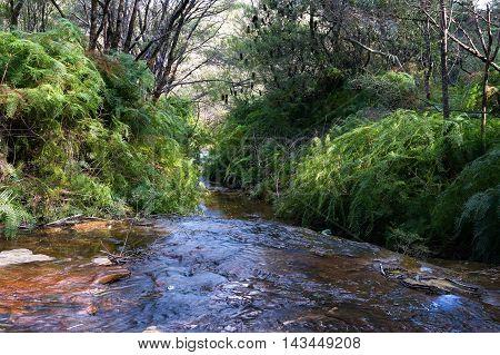 Australian Bush Creek, Wentworth Falls