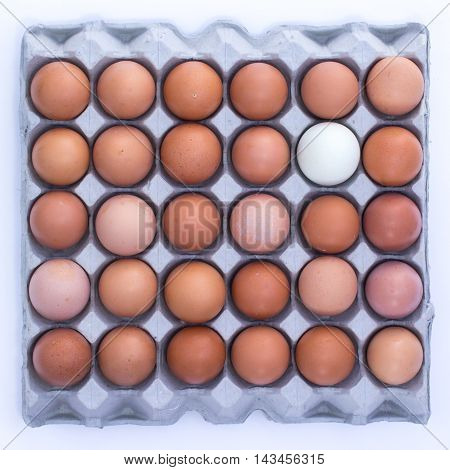 29 chicken eggs and 1 duck egg on the egg panel