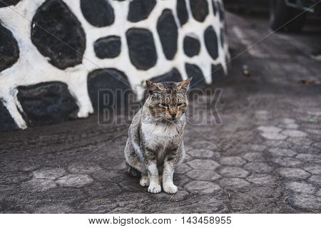 Poor homeless fighter cat with scar on face