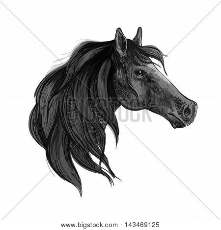 Black horse sketch of purebred arabian mare with silky mane. Equestrian sport, horse racing or t-shirt print design