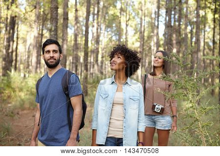Friends Looking Up Into The Forest