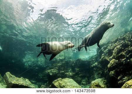 Sea Lion at La Paz in Mexico