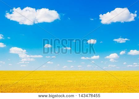 The boundless yellow wheat field and clouds in the sky