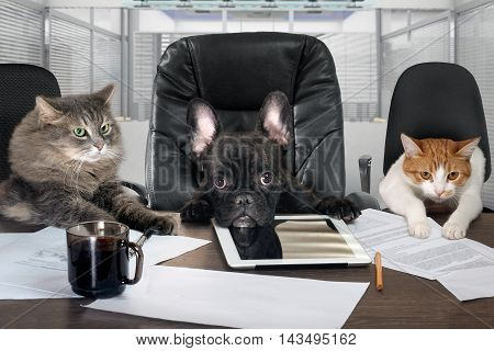 Businessmen in office. Dog head and cat - employees managers. Different characters personality. The concept of career growth business humor advice pet products