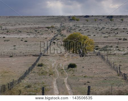 Vanishing Dirt Road New Mexico Rancher Fence Line
