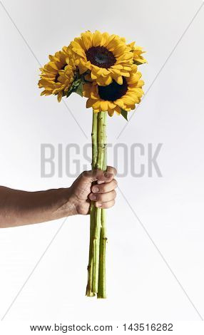Man holding sunflowers bunch on light background copy space