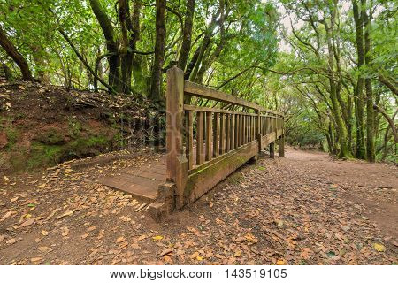 Pathway in Tropical forest Anaga Tenerife Canary island Spain.