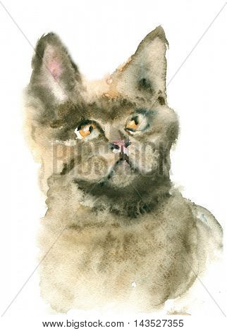 Watercolor illustration British cat isolated on white background