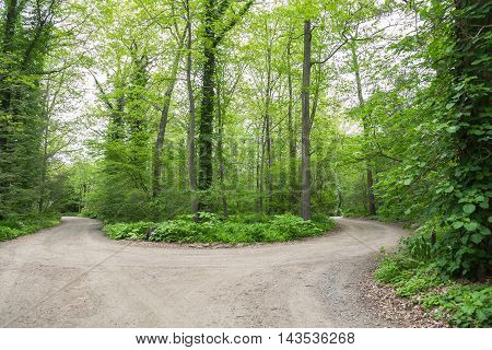 A gravel road that comes to a fork in the middle of the woods.