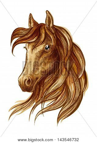 Brown stallion horse head sketch with purebred arabian racehorse. Equestrian sporting theme, horse racing badge and t-shirt print design