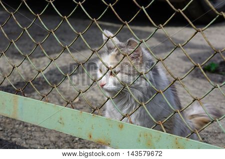 portrait stray young white and ginger cat behind the wire-mesh fence