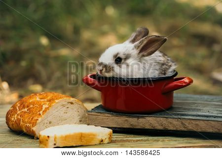 Cute baby rabit in small red pot among the food