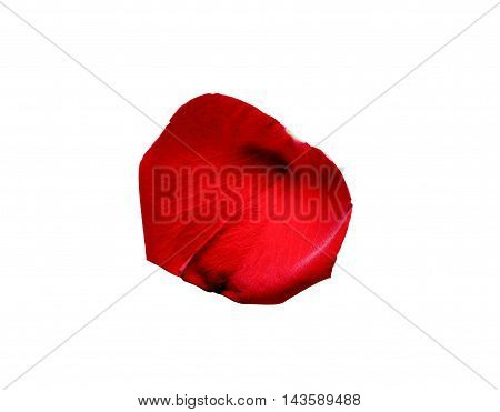 Red rose petal isolated on white background with clipping path