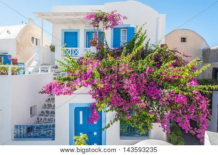 Traditiona home with flowers in Oia - Santorini - Greece