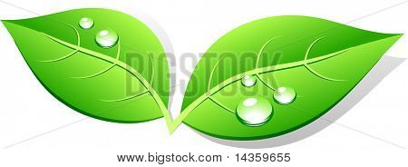 Green leaf icon. Vector illustration.